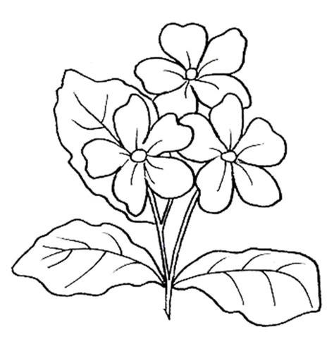 fiori disegni disegni di fiori da colorare foto nanopress donna