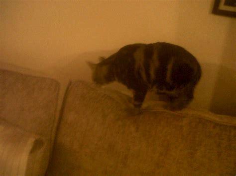 Cat Goddess Couch Xxgasm