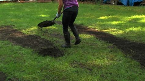 How To Reseed Bare Patches In A Lawn  Western Garden Centers