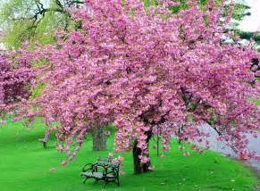 mille fiori favoriti pink saturday pink trees
