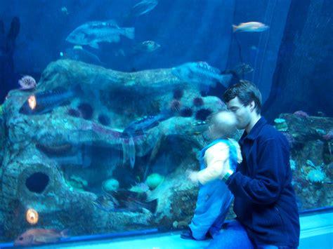 file parc aquarium du grand oc 233 an 01 jpg wikimedia commons