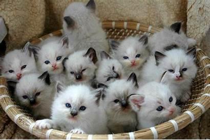 Adorable Baskets Animals Kittens Basket Cats Kitten