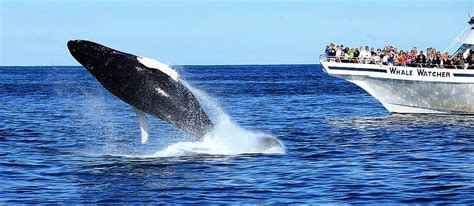 Boat Tours Yarmouth Ma by Welcome To Whale Cape Cod