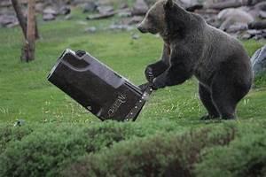 Watch Colorado Bears Put  U0026quot Bear
