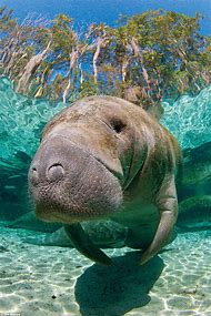 Freshwater Oceans with Manatees
