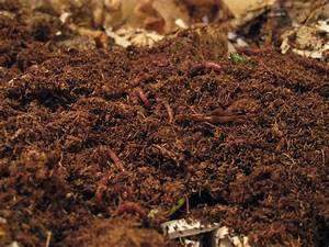 Compost Critters: Vermicomposting Made Easy