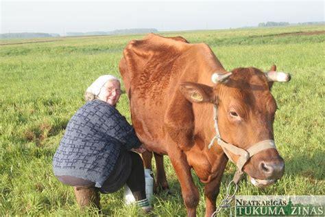 Govs šķirne 'Latvijas brūnā' - uz izzušanas robežas - NTZ