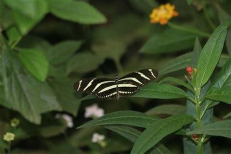 Common Tropical Rainforest Plants  Jungle Themes