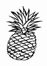 Pineapple Clip Cliparts Coloring sketch template