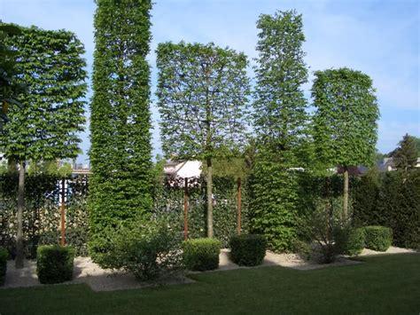 Garten Pflanzen Bäume by Hainbuche Spalierb 228 Ume Garten Jardiner 237 A Casa Jardin