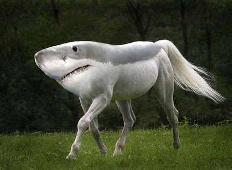 majestically morphed creatures weird animals  gyyp