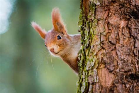 Freude Am Garten Im Herbst Und Winter by Tiere Im Herbst So Machen Sich Tiere Fit F 252 R Den Winter
