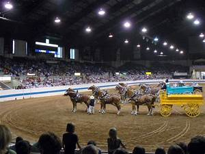 Types of Arena Sand & Equestrian Footing   River Sand, Inc.