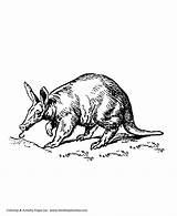 Coloring Aardvark Pages Ant Wild Animal Eater Animals Sheet Honkingdonkey sketch template