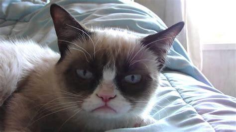 Sleepy Grumpy Cat! - YouTube