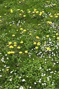 Desherbant Mauvaise Herbe : pelouse comment se d barrasser des mauvaises herbes ~ Premium-room.com Idées de Décoration