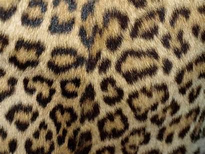Leopard Coat Background Pattern Backgrounds Skin Fur