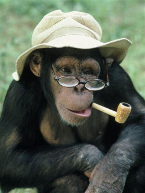 smoking monkeys  pics