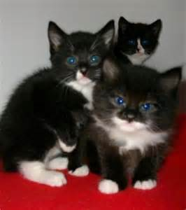 how much are cats cats protection news kittens the true cost