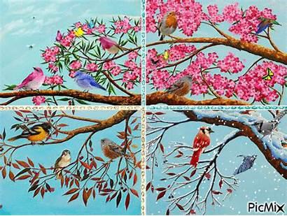 Seasons Four Creative Picmix Animation