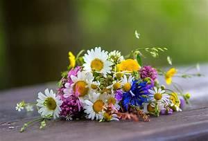 Pflanzen Im Mai : wiesenblumen im mai foto bild pflanzen pilze flechten bl ten kleinpflanzen ~ Buech-reservation.com Haus und Dekorationen