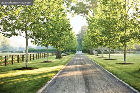 country driveway the white shed tree lined driveways