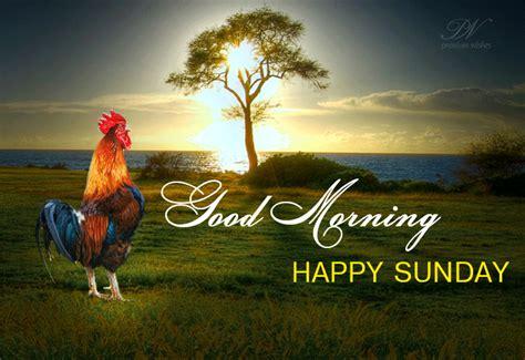 Sunday Morning Images Morning Image Happy Sunday Hd Morning Images New