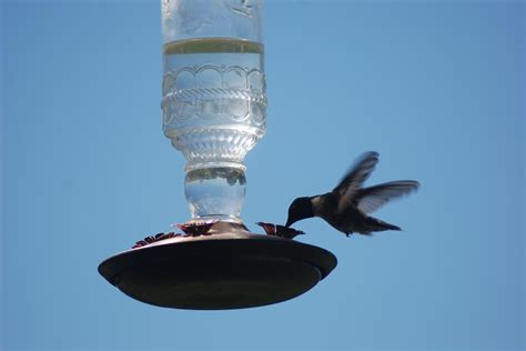 5 reasons your hummingbird feeder is leaking the