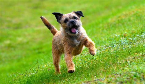 dog breed guides petinsurance com au