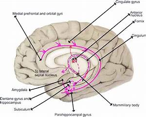 Figure  The Neural Circuit That Arises From The
