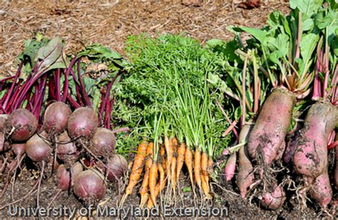 Grow It Eat It 2013 The Year Of The Root Vegetable