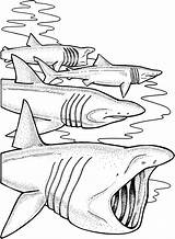 Shark Coloring Pages Basking Sharks Print Sharkcoloring Colouring Google Animals Printable Supercoloring Colorings Popular Jaws sketch template
