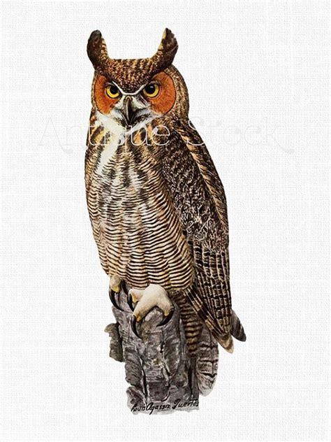 bird clip art image great horned owl instant