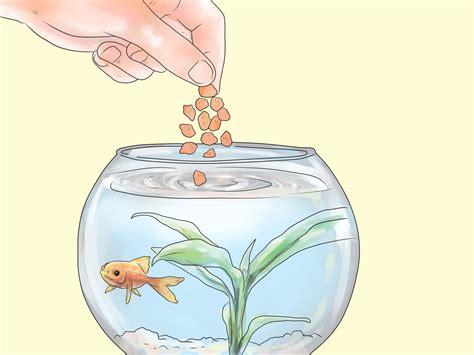 bass   american gamefish   home
