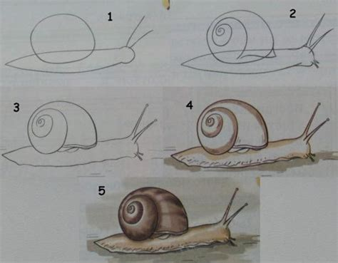 art  children learn  draw  snail drawing lessons