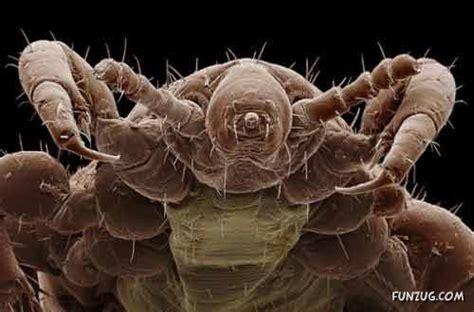 insects   microscope imron wahyudis weblog