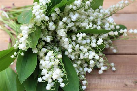 flowers konwalie white lilies   photo  pixabay