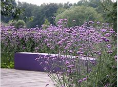 Verbena bonariensis outdoor furnitures Pinterest