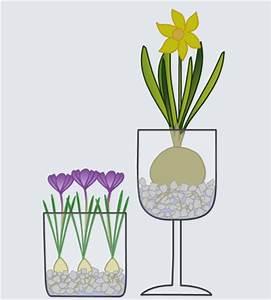 Blumenzwiebeln Im Glas : bastelanleitung blumenzwiebeln im glas diverses nic bastelt ~ Markanthonyermac.com Haus und Dekorationen