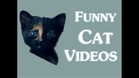 Funny Cat Videos (clean) New 2014  Funny Clean Cat Video