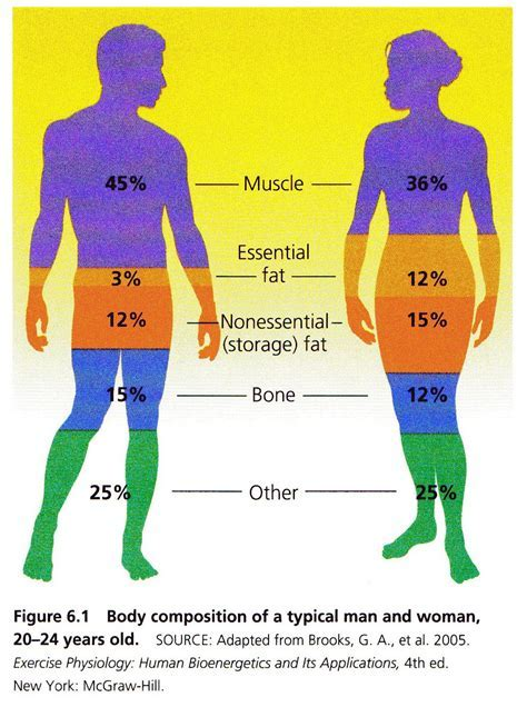 WhollyWell: Understanding energy use and the fat burning zone