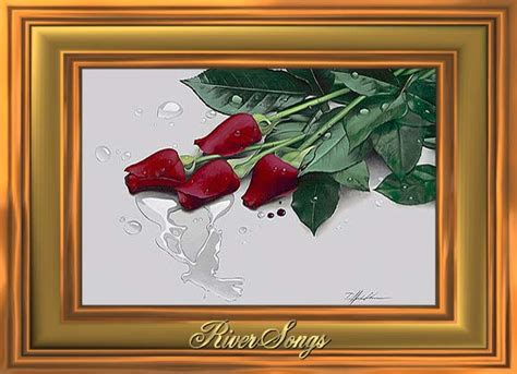 rose rose love cards red roses  riversongs
