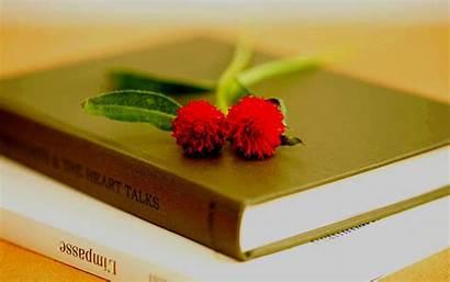Flower Flowers Books Wallpapers Desktop Studying Widescreen