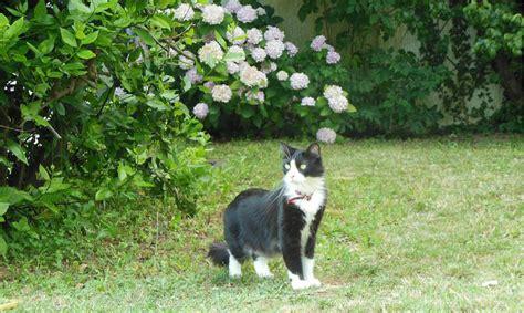 chat interieur ou exterieur pr 233 parer votre chat d int 233 rieur aux visites 224 l ext 233 rieur wanimobuzz
