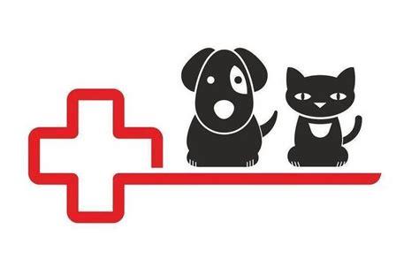 roentgen bei hunden und katzen agila