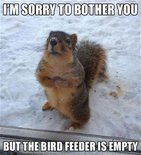 Cutest Animal Memes - 25 funny animal memes to make you laugh till you drop