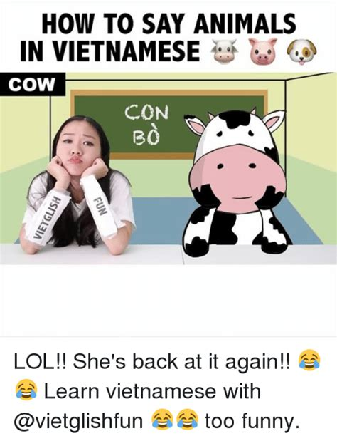 How To Say Meme - how to say animals in vietnamese cow con b0 lol she s back at it again learn vietnamese