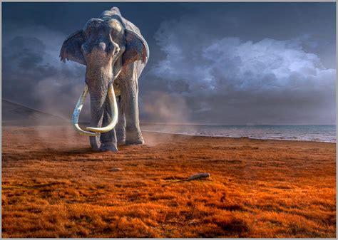 led bilder led bild mammut hochwertige led gallery prints