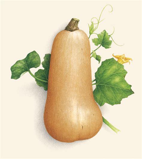 varietes de courges et potirons 28 images citrouille potiron semer planter entretenir et r