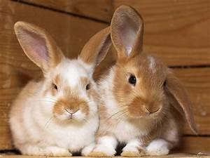 Kaninchenkäfig Für 2 Kaninchen : hasen kaninchen ~ Frokenaadalensverden.com Haus und Dekorationen